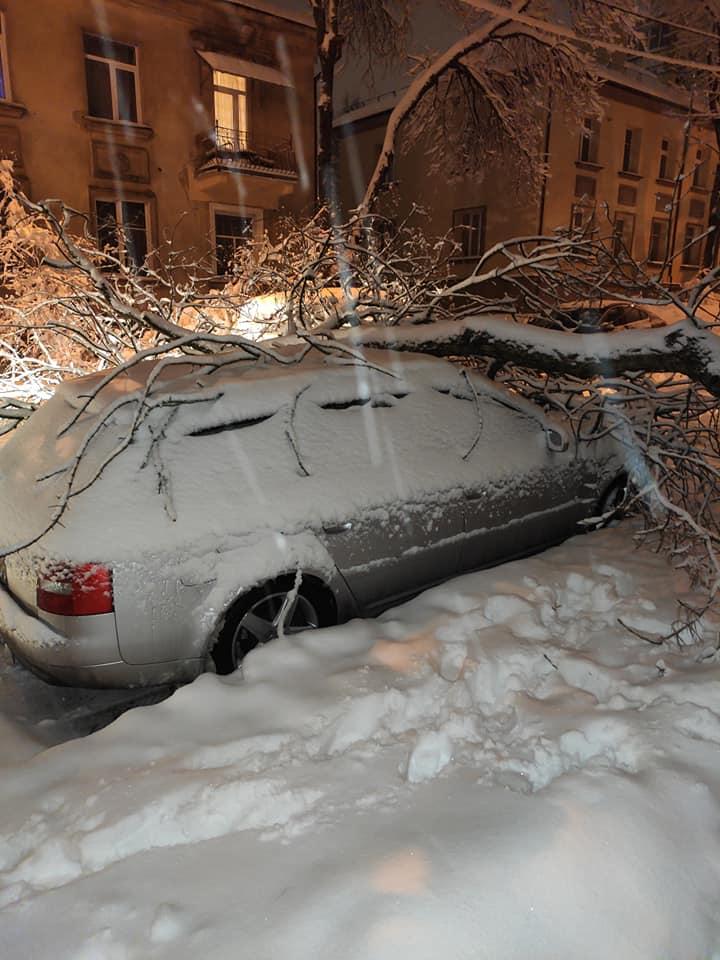 """Naujininkuose ant """"Audi"""" markės automobilio užkrito medis."""