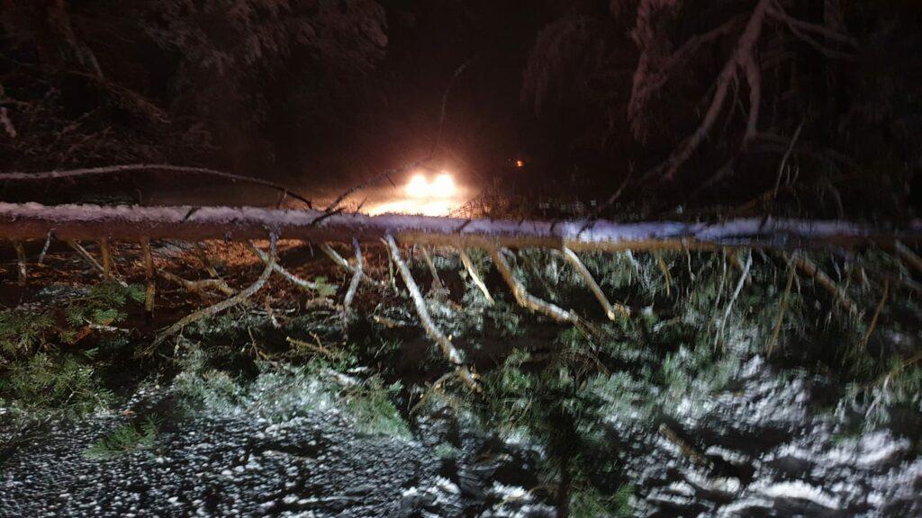 Nemenčinės plentas tarp Kairėnų ir Karačiūnų užblokuotas dėl nukritusio medžio
