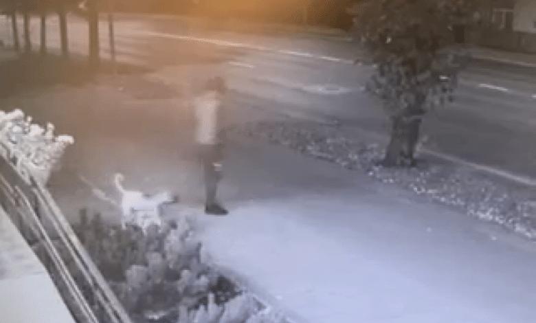 Automobilį apvogusį vyrą pareigūnai surado pagal jo šuns petnešas